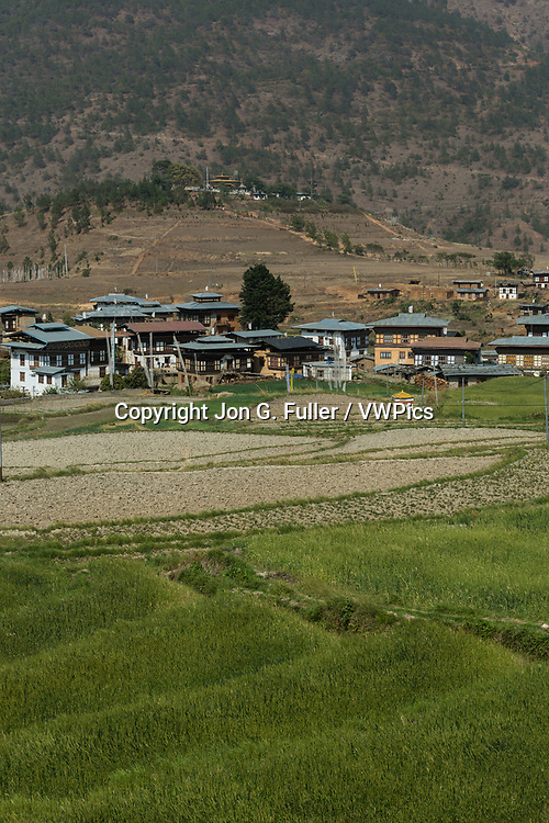 Chimi Lhakhang Temple on the distant hilltop near Sopsokha is visited by women seeking ha blessing of fertility.  Rice grows in the terraces in the foreground.