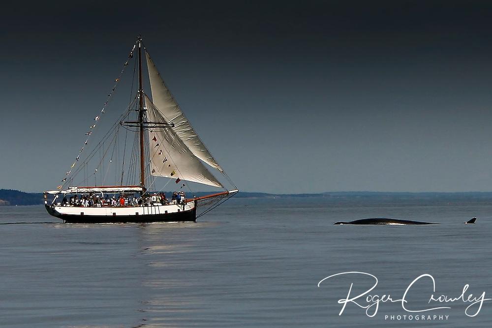 Roger Crowley / CrowleyPhotos.com