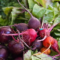 Organic heirloom Chiogga beets, golden beets, red beets at a farmers' market.
