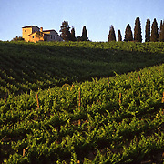 Country house with cypress and vineyards, Tuscany