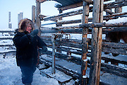 The Pole of Cold - Horse breeder with a Yakutian horse at a horse breeders farm close to the village of Tomtor. The breeder is going to weight the horses. Yakut pony or simply the Yakut, is a rare native horse breed from the Siberian Sakha Republic (or Yakutia) region. It is noted for its adaptation to the extreme cold climate of Yakutia, including the ability to locate and graze on vegetation that is under deep snow cover. The area is extremely cold during the winter. Two towns by the highway, Tomtor and Oymyakon, both claim the coldest inhabited place on earth (often referred to as -71.2°C, but might be -67.7°C) outside of Antarctica. The average temperature in Oymyakon in January is -42°C (daily maximum) and -50°C (daily minimum). The images had been made during an outside temperature in between -50°C up to -55°C. Tomtor, Jakutien, Yakutia, Russian Federation, Russia, RUS, 19.01.2010