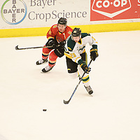 2nd year forward Tyson Predinchuk (29) of the Regina Cougars in action during the Men's Hockey home game on February 3 at Co-operators arena. Credit: Arthur Ward/Arthur Images