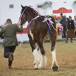 Miss K L Pegg's Lilybank Juliet<br /> f  2012<br /> Sire  Moorfield George<br /> Dam  Cooslow Sapphire<br /> Breeder  J Long & A Hayes