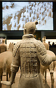 Terracotta warrior on display in the Shaanxi History Museum, Xian, China