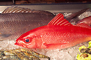 Onaga, red snapper<br />