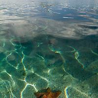 Sea star underwater. San Blas, Panama