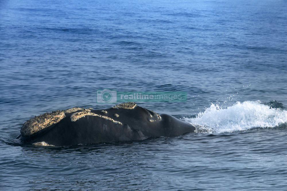 September 30, 2018 - South Africa - Whale watching boat tours in Hermanus, Western Cape, South Africa (Credit Image: © Sergi Reboredo/ZUMA Wire)