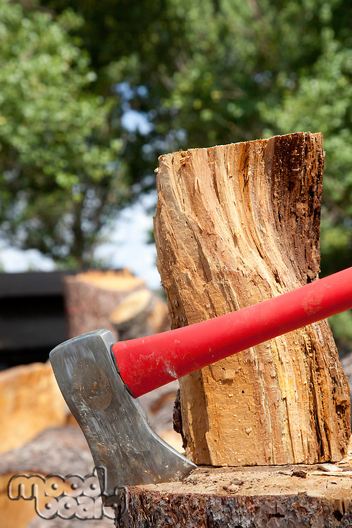 Close-up of axe wedged into tree stump