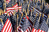 Cluster of American flags