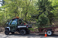 A new tree arrives at the Hallett Nature Sanctuary in Central Park