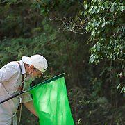 Dr. Alexander Sasha Konstantinov collects insects in the forest using an insect net.