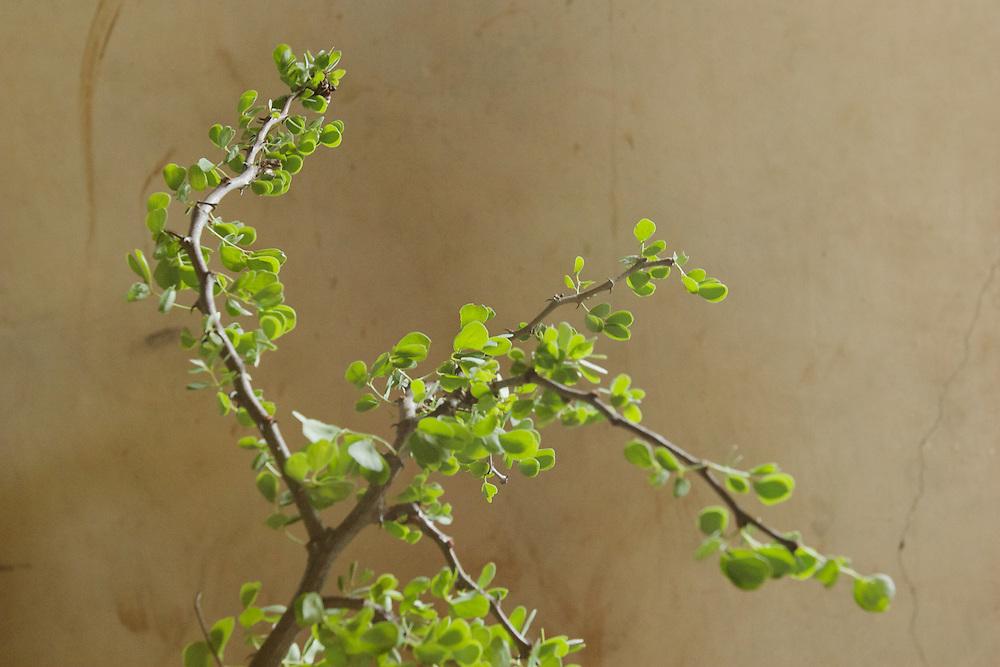 Medicinal plant sample 5