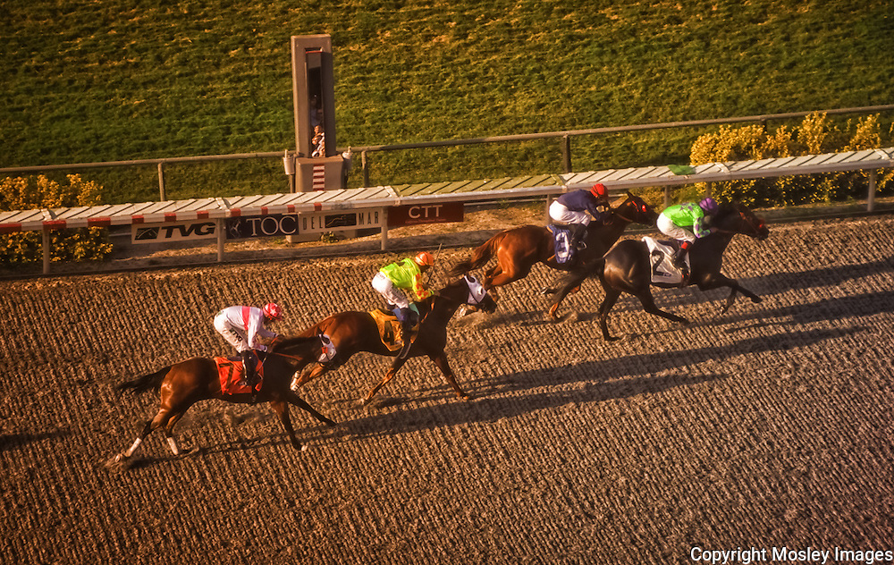 Del Mar Thoroughbreds sprint towards the finish line. Photo by Barry A Mosley Sports Photography.