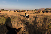 Mexican cowboys ride through fields during the annual Cabalgata de Cristo Rey pilgrimage January 5, 2017 in San José del Rodeo, Guanajuato, Mexico. Thousands of Mexican cowboys and horse take part in the three-day ride to the mountaintop shrine of Cristo Rey stopping along the way at shrines and churches.