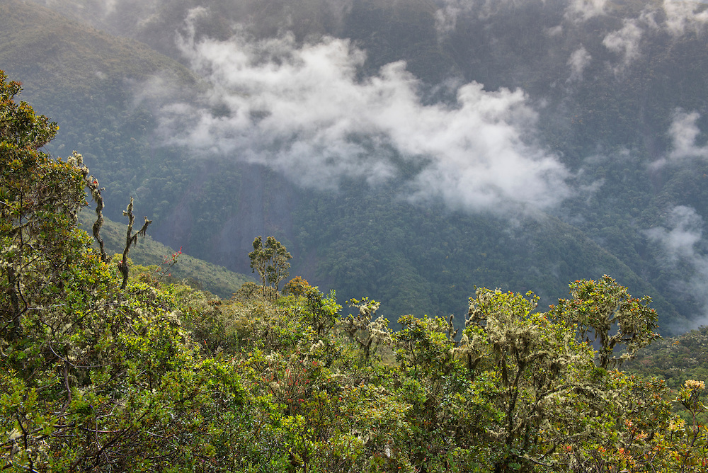 South America; Peru; Amazonia; Manu; National Park; UNESCO; World Heritage; cloud forest