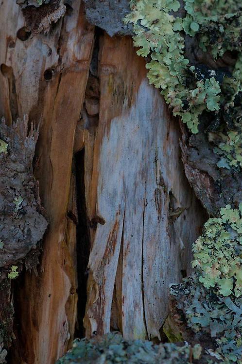 Tree Bark and Lichens, Lower Negro Island, Maine, US
