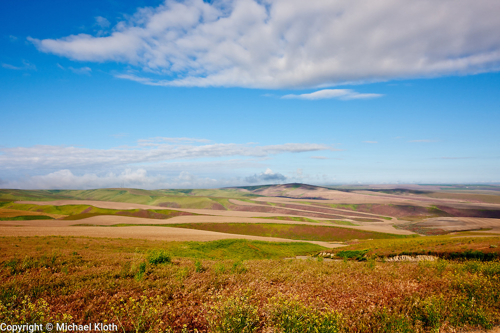 This image is characteristic of the Palouse region.