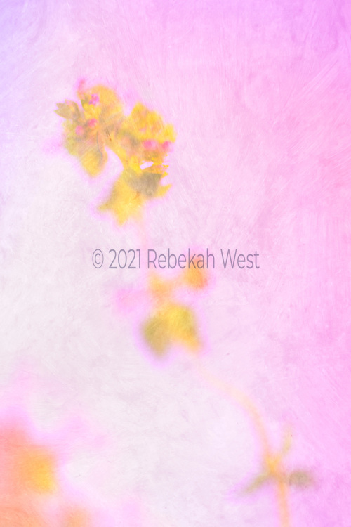 dreamy field of vertical pinks and whites with yellow and hot pink flowers on stalk starting lower right extending toward upper left, two bunches in upper left corner more in focus, soft additional yellow and peach accent in lower left corner, flower art, feminine, high resolution, licensing, iridescent, 3136 x 4705