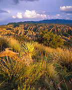 0103-1003B ~ Copyright: George H.H. Huey ~ View from Surgarloaf Mountain, with the High Chiricahuas in the distance, with Schotts yucca [Yucca shotti] and bear grass [Nolina microcarpa].  Chiricahua National Monument, Arizona.