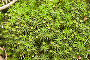 Fot  Piotr Gesicki forest sheathing, moss, lichen, photo Piotr Gesicki