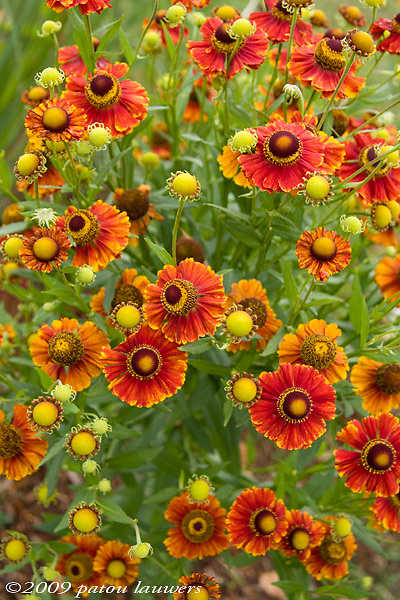 A multitude of red, yellow and orange flowers
