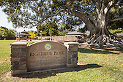Big Tree Park of Glendora