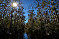 Big Cypress Swamp. Winter Nature in Florida Image taken with a Leica T camera and 11-23 mm lens.