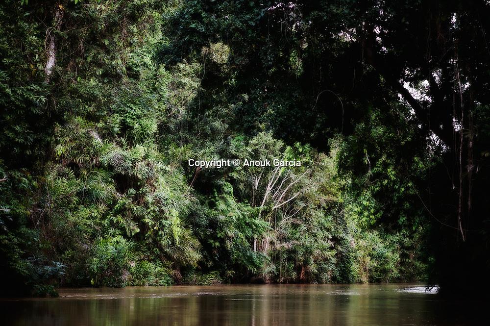 Le Rio Japiim abrite des espèce animales et végétales uniques dans la région dont le boto, le fameux dauphin d'eau douce.   O Rio Japim, um parano do Moa e um lugar a onde sobrevive um a fauna e flora unica. E o lugar mais curtido dos botos.