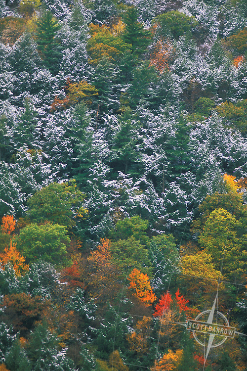 Mixed colors of foliage with light snow coverage.