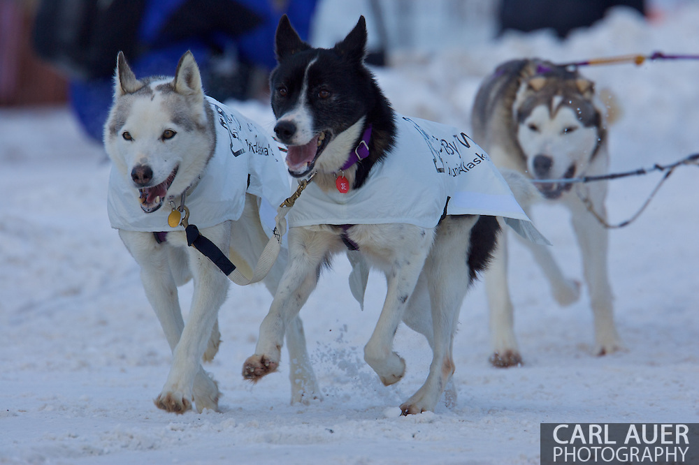 March 7th, 2009:  Anchorage, Alaska - The team of North Dakota's Mamcu Yoshida start their way down 4th Avenue to start the 2009 Iditarod.