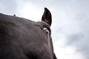 Close-up of horse eye at Bigfork Equestrian Center