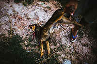 A small dog is slaughtered for dinner by a family in Dong Mafai village in Sakon Nakhon province, northeastern Thailand. The family, who wished to remain anonymous, slaughter about 20 dogs a week to sell to neighbors and other local buyers.