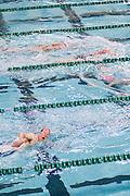 Swimmers compete in the swimming portion of the Race for a Reason Triathlon. Photo by: Ross Brinkerhoff. Race for a Reason, Race 4 A Reason, Annual Events, Events, Students, Faculty & Staff
