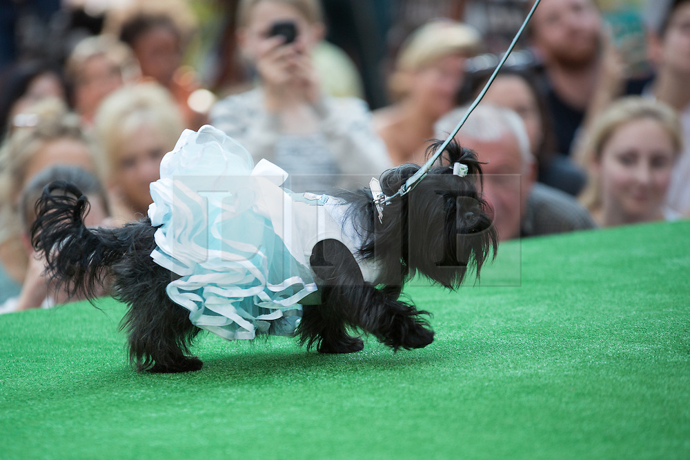 © Licensed to London News Pictures. 26/08/2013. London, UK. A dog dressed in a tutu participates in the Paw Pageant 2013 held at Old Spitalfields Market in East London. Dogs wear designer fashion in a canine fashion show to raise money for Battersea Dogs and Cats home. Photo credit : Vickie Flores/LNP