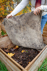 Covering a compost heap with an old carpet in preparation for winter