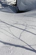 Tiny paw prints lead to a snowy burrow