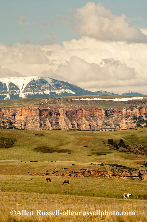 Bighorn Canyon National Recreation Area, Montana, Horses, Crow Indian Reservation, Bighorn Mountains