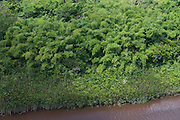 Bamboo<br /> Essequibo River<br /> GUYANA<br /> South America<br /> Longest river in Guyana