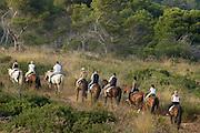 Spanien Spain,Mallorca Balearen..Cala Rajada..Cala Agulla, Pinien am Strand, Reiter, Pferde..Cala Agulla, horse riding....