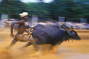 A kambala (Tulu &amp; Kannada: ಕಂಬಳ) is an annual buffalo race held in coastal Karnataka. Traditionally, it is sponsored by local Tuluva landlords and households in the coastal districts of Dakshina Kannada and Udupi, a region collectively known as Tulu Nadu.<br />