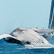 SAILING - Audi Hamilton Island Race Week 2014 - 16-23/08/2014<br /> photo: Andrea Francolini/AUDI<br /> <br /> Caption: SALACIA<br /> <br /> Restrictions: no advertising and not third party promotional material.<br /> Mandatory Credit
