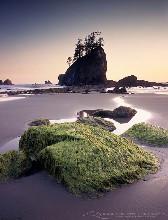 Seastacks and rocks at low tide Second beach Olympic National Park Washington USA