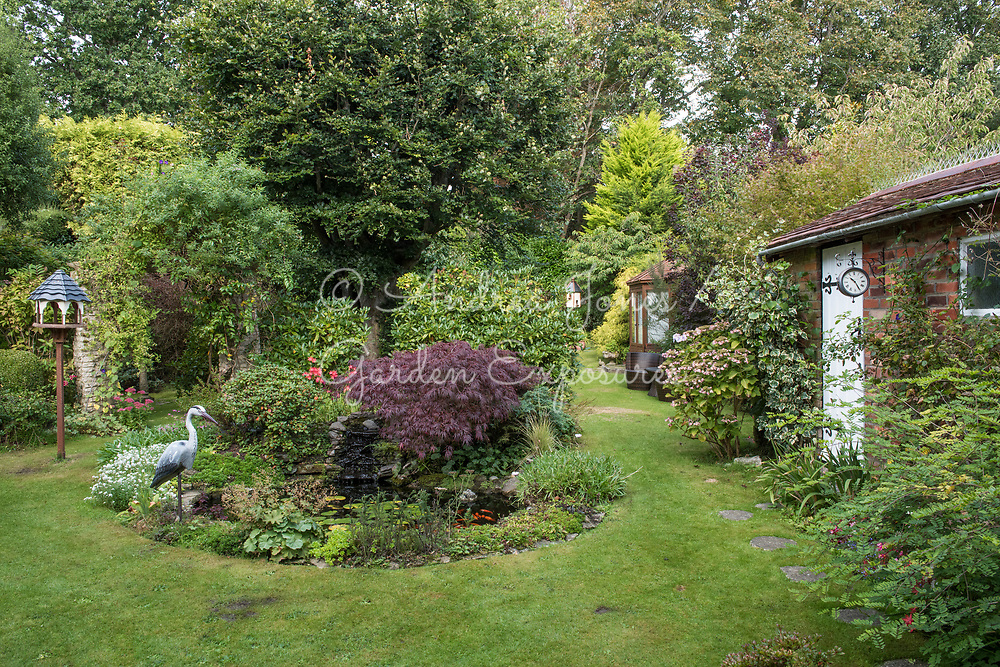 Domestic garden including a pond with waterlilies, Acer palmatum dissectum, Sedums, bird table and heron bird scarer