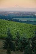 Cristom estate vineyards, Eola-Amity AVA, Willamette Valley, Oregon