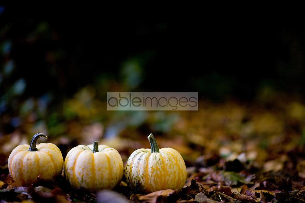 Three yellow pumpkins on ground