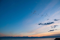 Birds fly high in the blue sky as the sun sets over the ocean in Victoria, BC