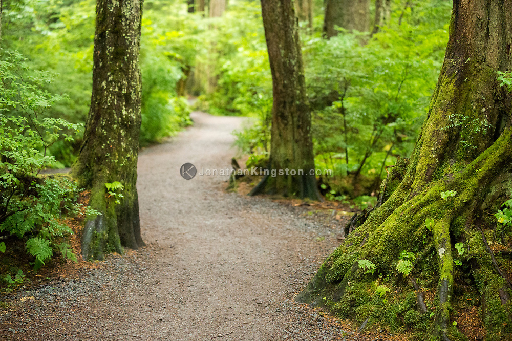 A graveled path through the woods of the temperate rainforest in Sitka, Alaska.