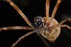 Spider Silk | Spinnenseide