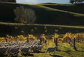 New Zealand vineyards misc