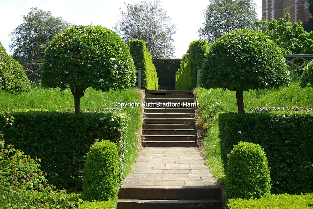 A perfectly symmetrical pair of standard hemispherical box trees (Buxus sempervirens) at the entrance to the knot garden at Hatfield Old Palace.<br /> <br /> The knot garden was created in 1984 by Lady Salisbury, but the extensive gardens at Hatfield House were begun by Robert Cecil (and his plant-hunter John Tradescant) in the early 17th century. Lady Salisbury has done much to promote the work of the Tradescant Trust, based at the Museum of Garden History, Lambeth, South London, for which she also designed a knot garden.<br /> <br /> Date taken: 31 May 2013.